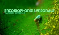 Site Entomophonie syntonale 72dpp