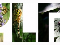 ylm-insectes-fenetre