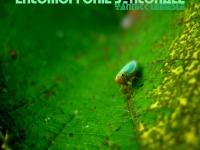 Concert Entomophonie Syntonale