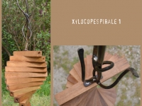 Xylocopespirale / 1